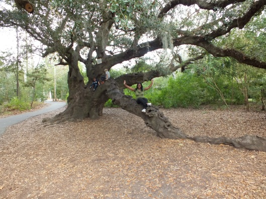 Me in a tree! ~The Audobon Zoo in New Orleans